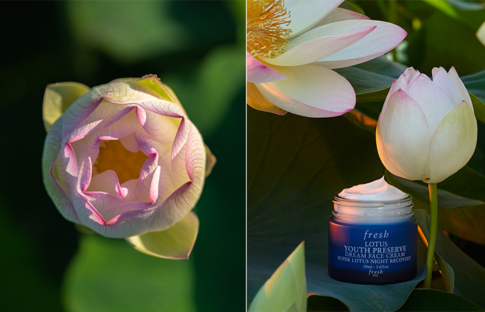 Fresh Lotus Youth Preserve Dream Face Cream Review 1